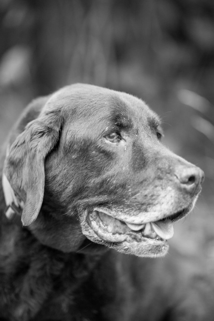 Pet photography - Fredericton